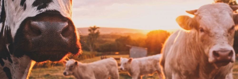 HSE to clamp down on farms this 2019